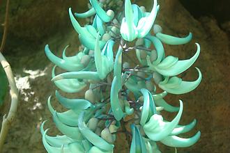 熱帯植物館写真