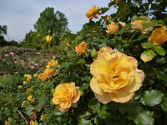 植物園写真